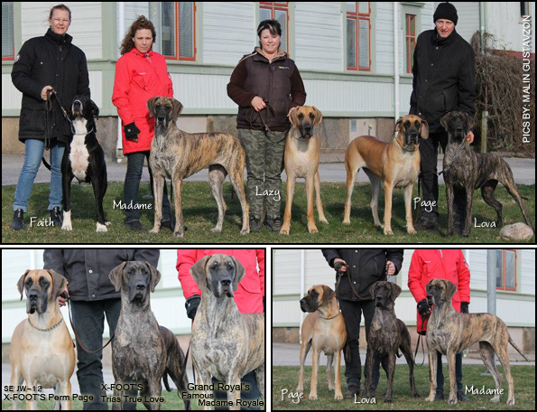 Great Dane Walk