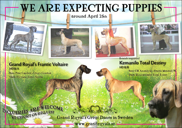 We are expecting puppies between Destiny & Akilles.