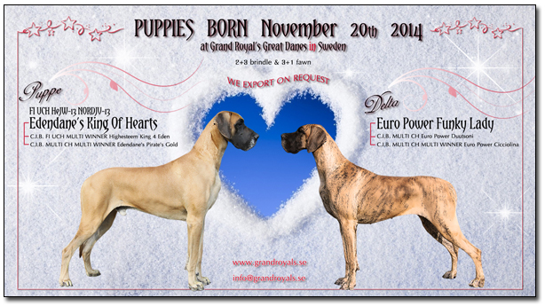 Puppies born November 20th 2014