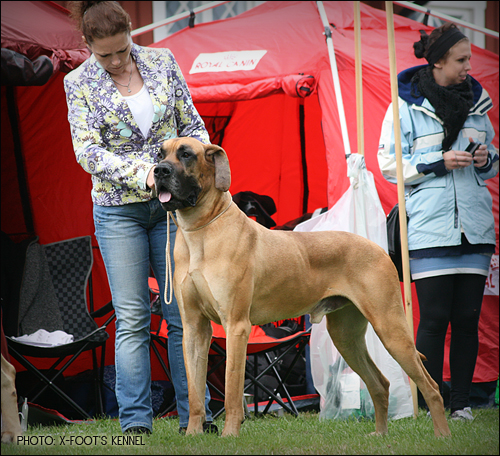 Diego at the Nat Dog show in Ljungskile, placed as 4th Best Male