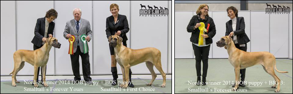 Lova aka Smalltall's Forever Yours BOB Puppy + BIG3. Owner: Johan Ottersten