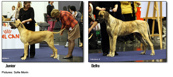 Junior & Delta at MyDog 2014