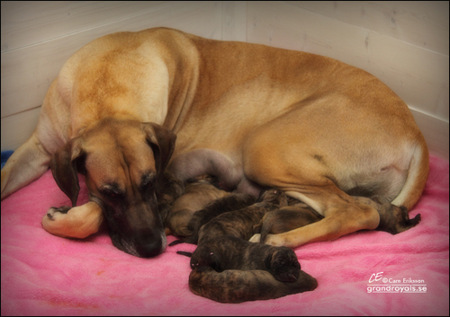 Astrid and her lovely babies ...