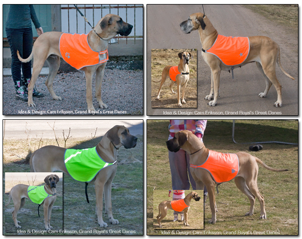 reflective vests for Great Dane
